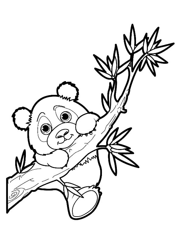 Disegno 16 di panda da stampare e colorare