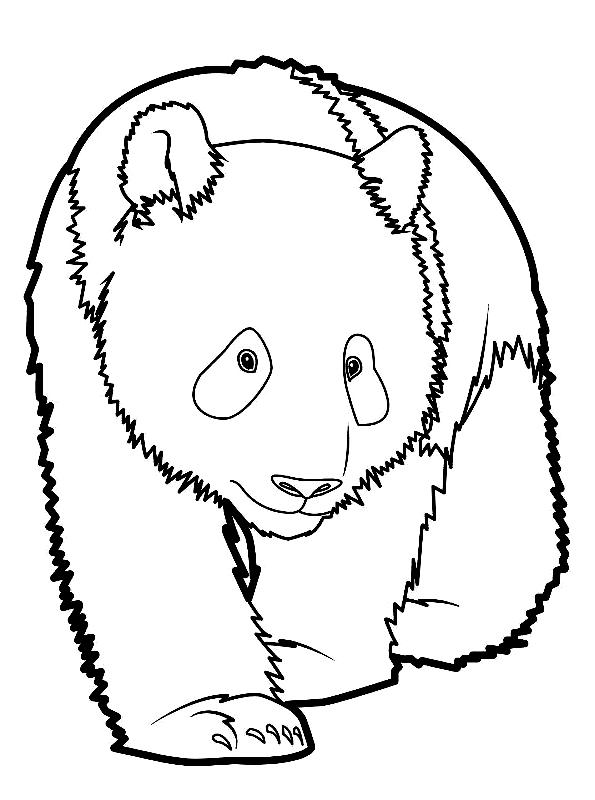 Disegno 20 di panda da stampare e colorare
