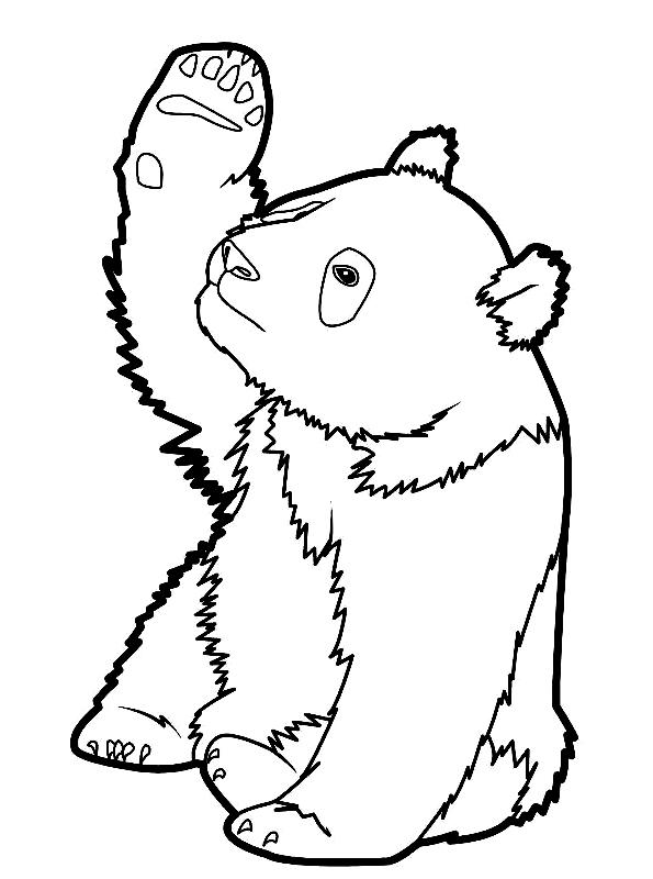 Disegno 23 di panda da stampare e colorare