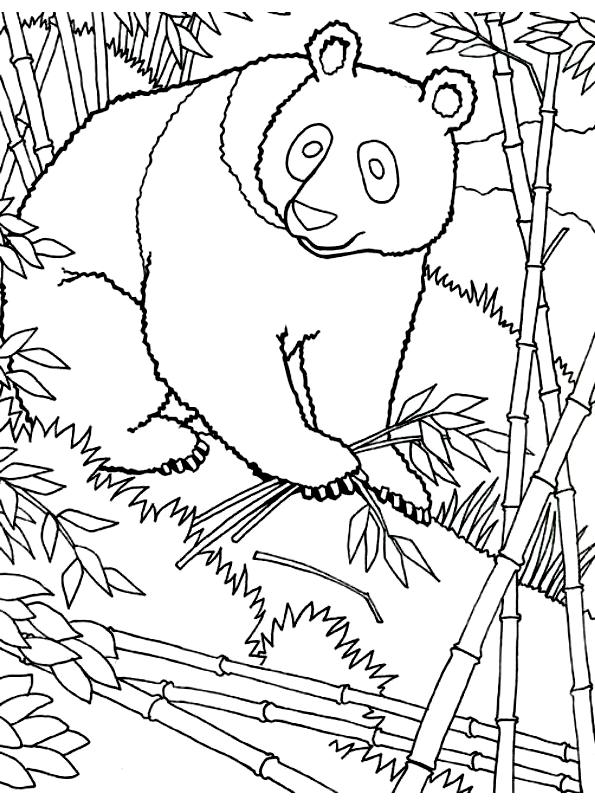 Disegno 24 di panda da stampare e colorare