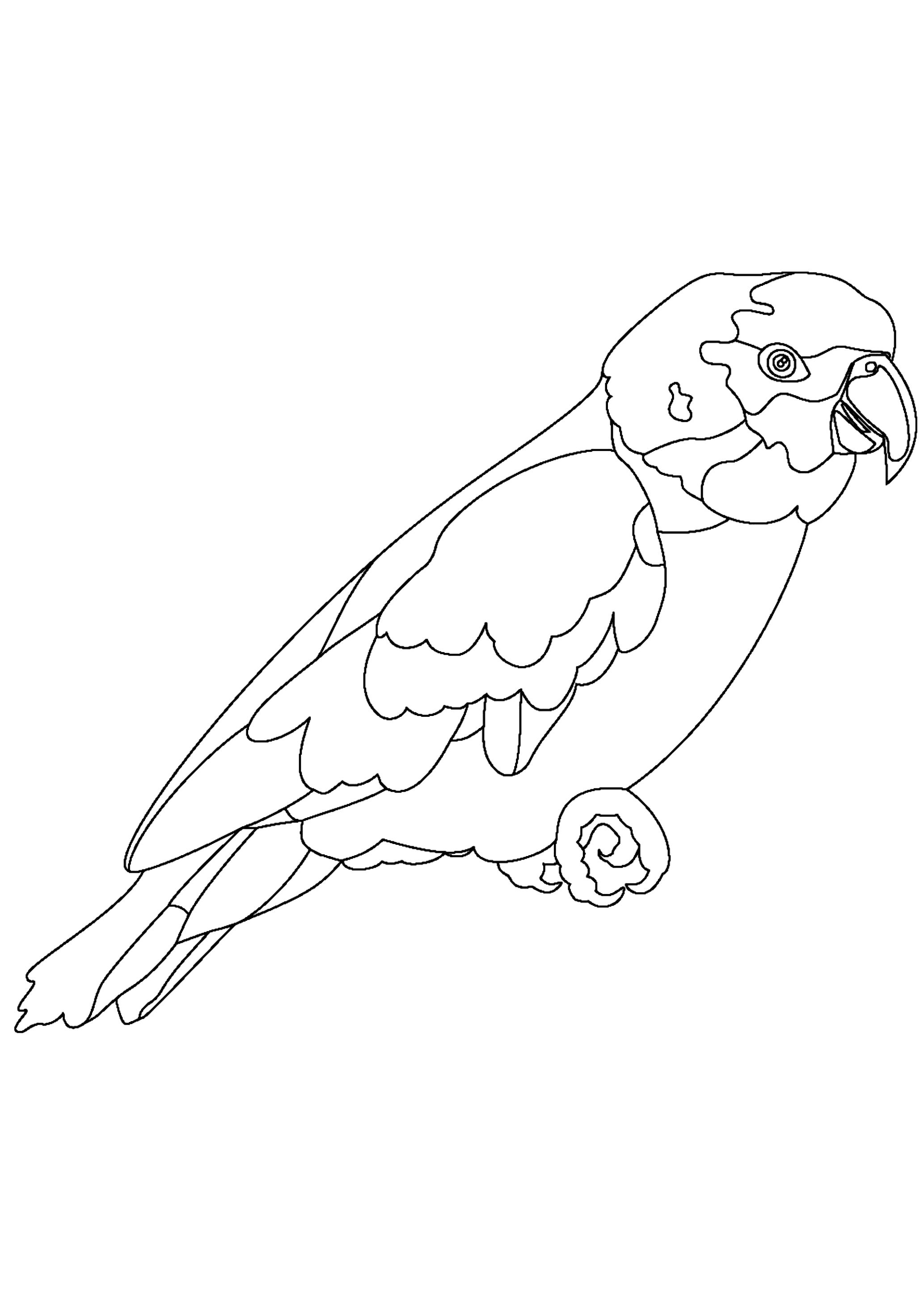 Disegno 1 di pappagalli da stampare e colorare
