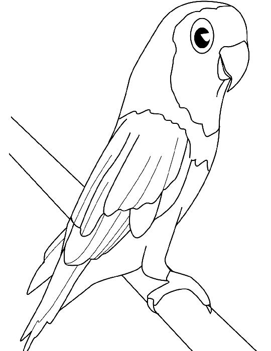 Disegno 3 di pappagalli da stampare e colorare