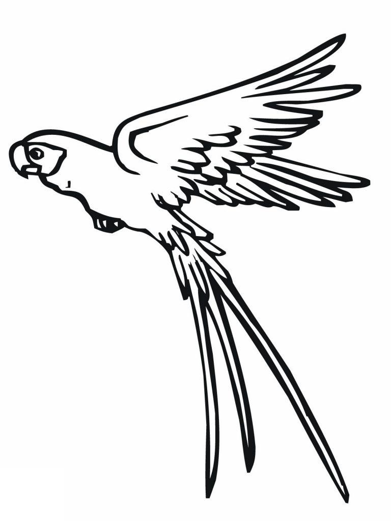 Disegno 4 di pappagalli da stampare e colorare