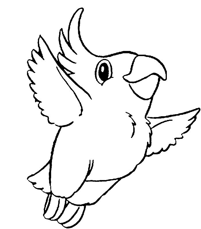 Disegno 5 di pappagalli da stampare e colorare