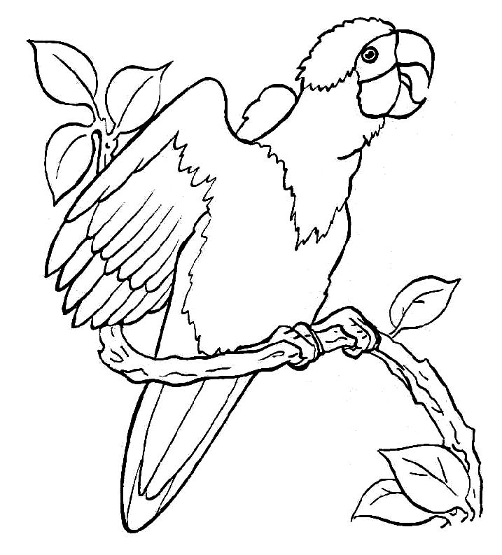 Disegno 6 di pappagalli da stampare e colorare