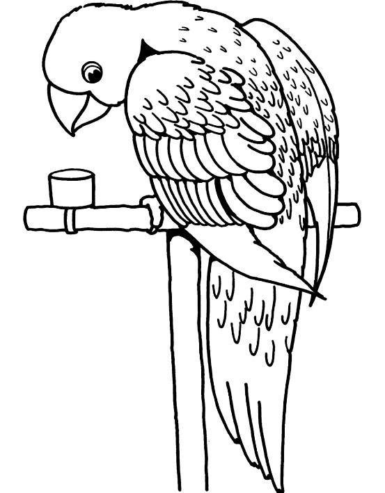 Disegno 10 di pappagalli da stampare e colorare
