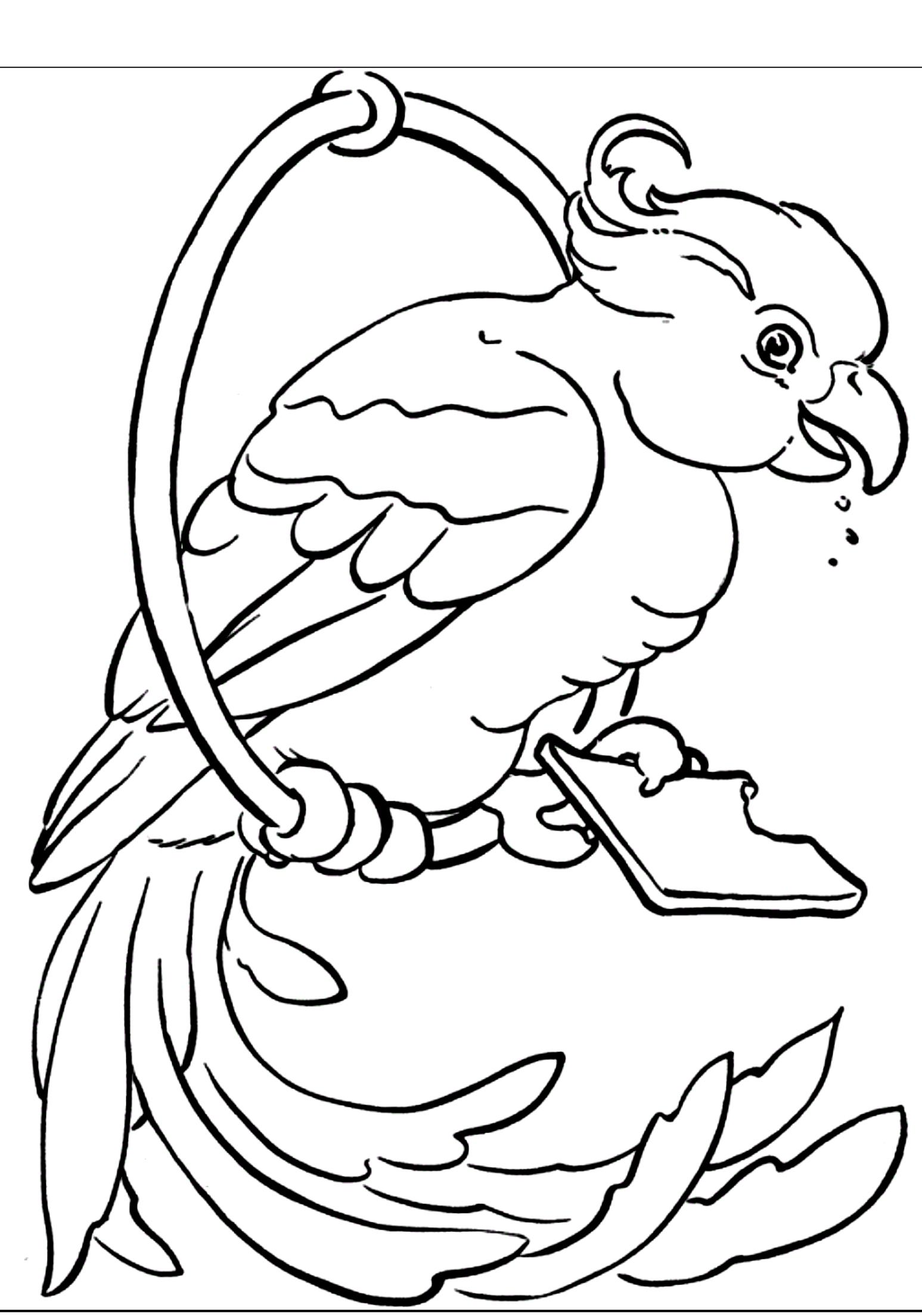Disegno 16 di pappagalli da stampare e colorare
