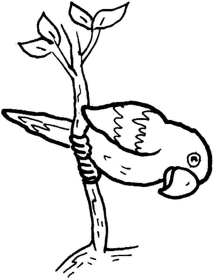 Disegno 17 di pappagalli da stampare e colorare