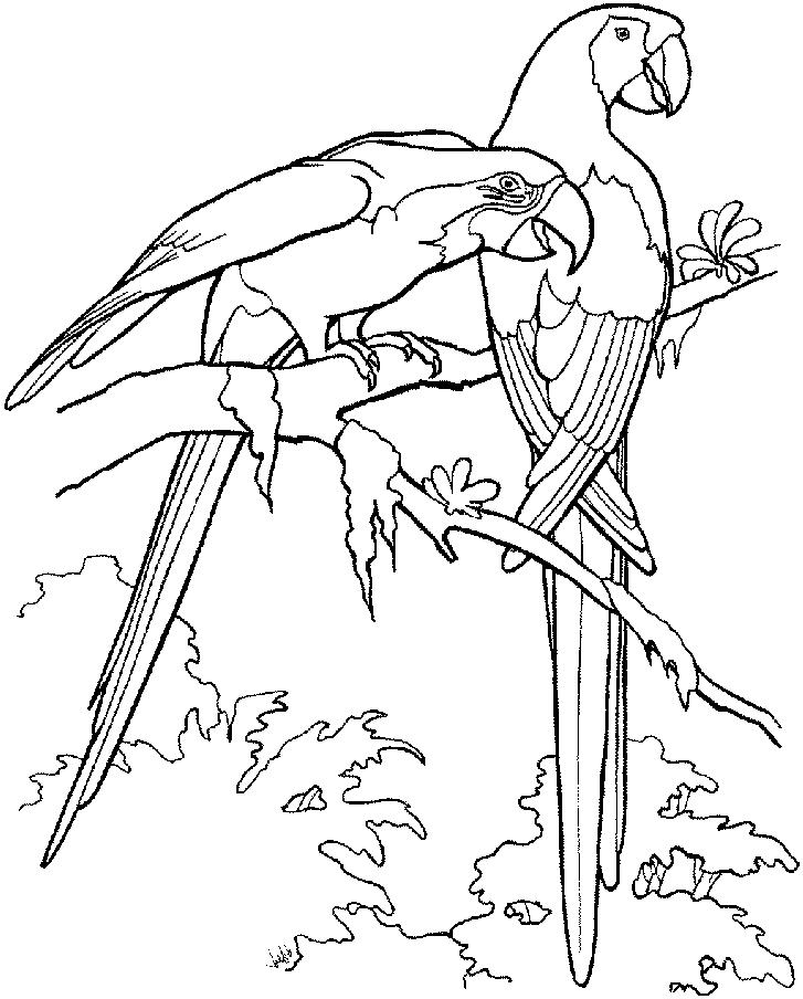 Disegno 19 di pappagalli da stampare e colorare