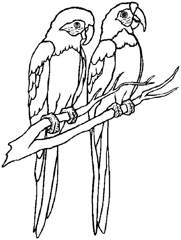 Disegno 20 di pappagalli da stampare e colorare