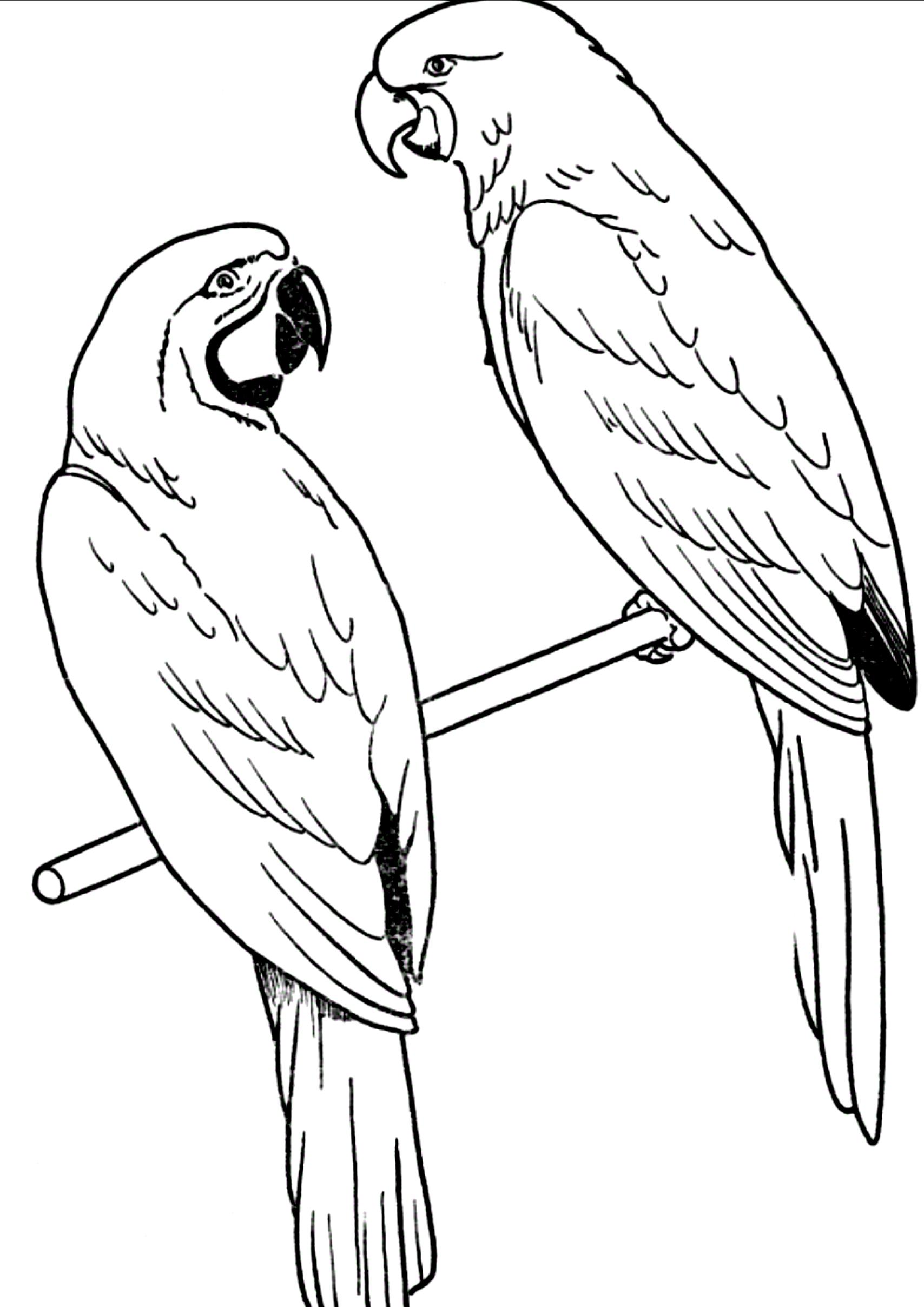Disegno 21 di pappagalli da stampare e colorare