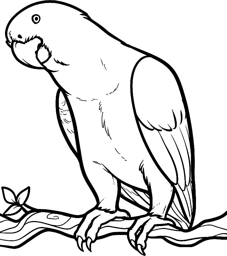 Disegno 23 di pappagalli da stampare e colorare