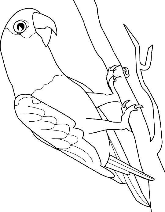Disegno 24 di pappagalli da stampare e colorare