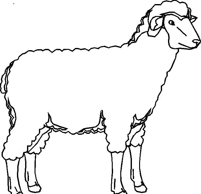 Disegno 5 di pecore da stampare e colorare