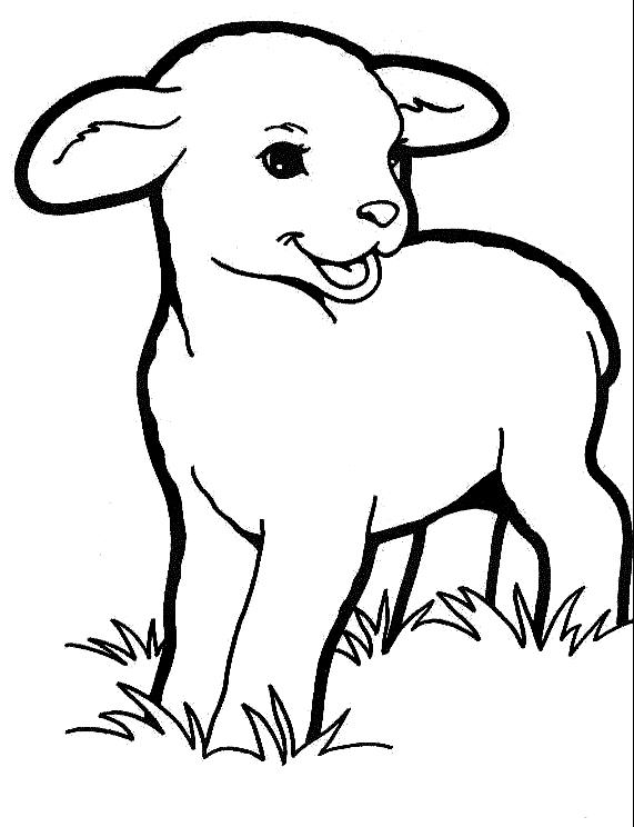 Disegno 7 di pecore da stampare e colorare