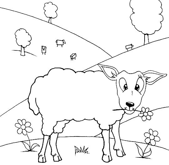 Disegno 11 di pecore da stampare e colorare