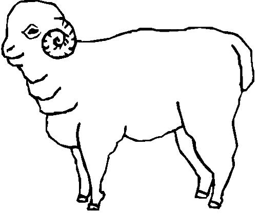 Disegno 15 di pecore da stampare e colorare