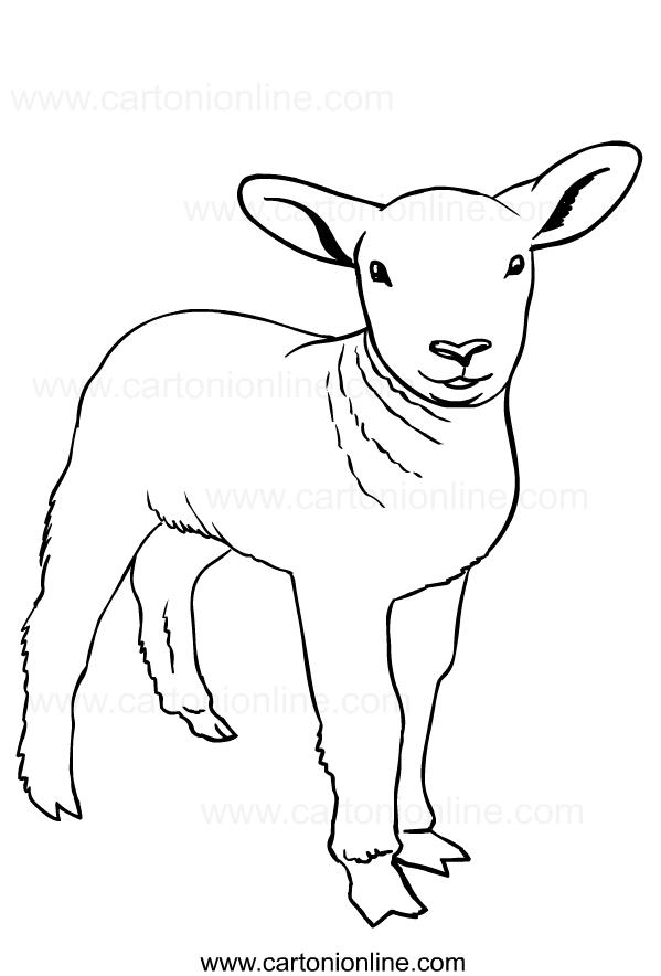 Disegno di pecore da stampare e colorare