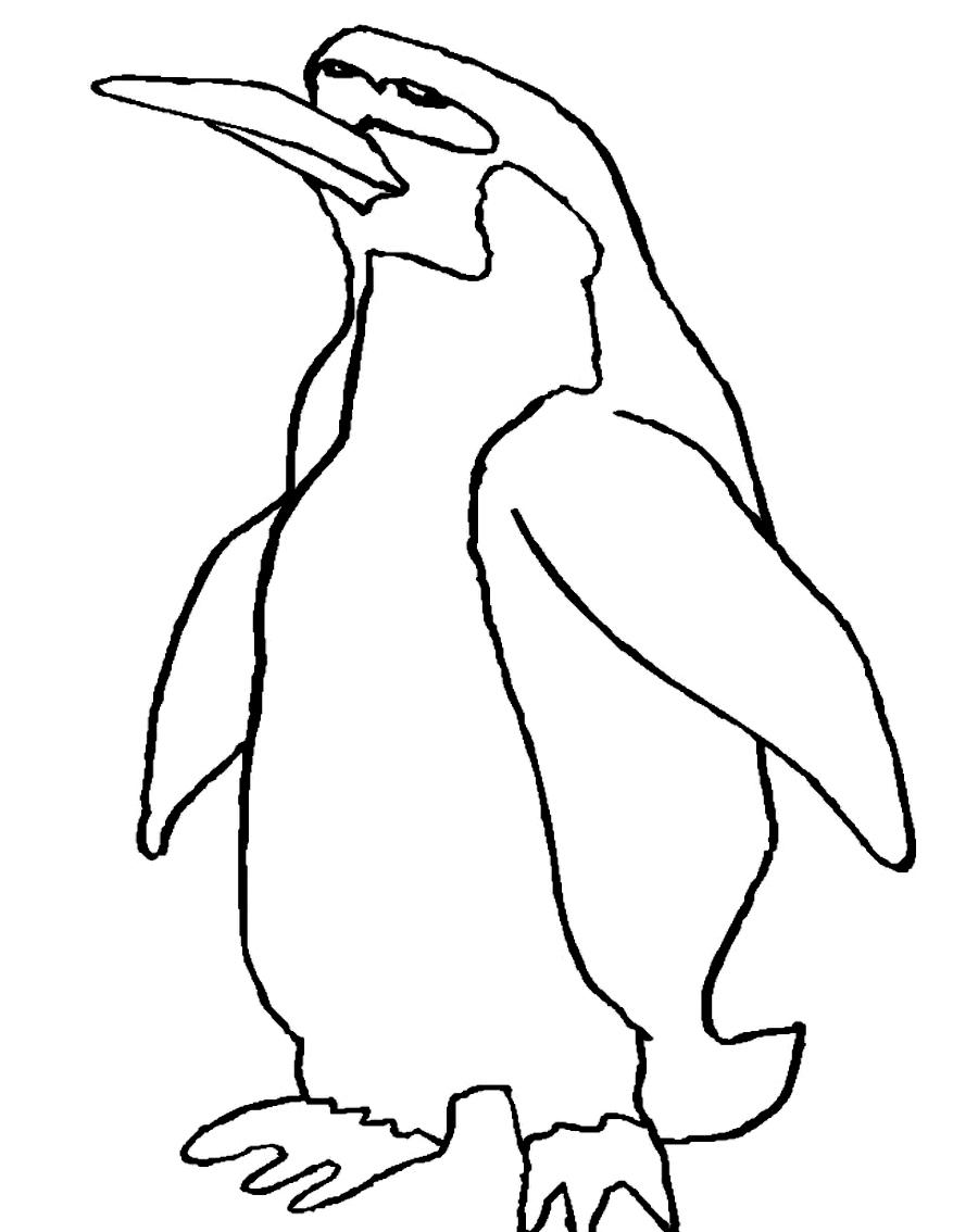 Disegno 12 di pinguini da stampare e colorare
