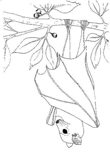 Dibujo 1 de murciélagos para imprimir y colorear