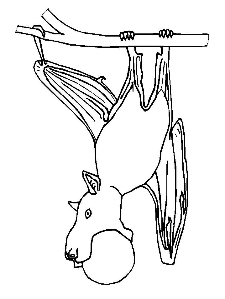 Dibujo 4 de murciélagos para imprimir y colorear