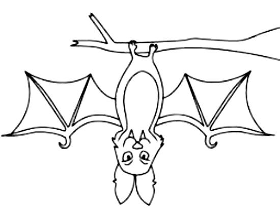 Disegni Da Colorare Pipistrelli.Disegno 11 Di Pipistrelli Da Colorare