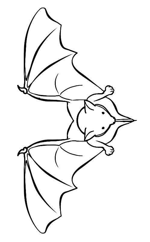 Disegno 12 di pipistrelli da stampare e colorare