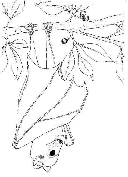 Disegno 14 di pipistrelli da stampare e colorare