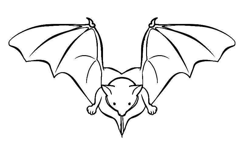 Disegno 21 di pipistrelli da stampare e colorare