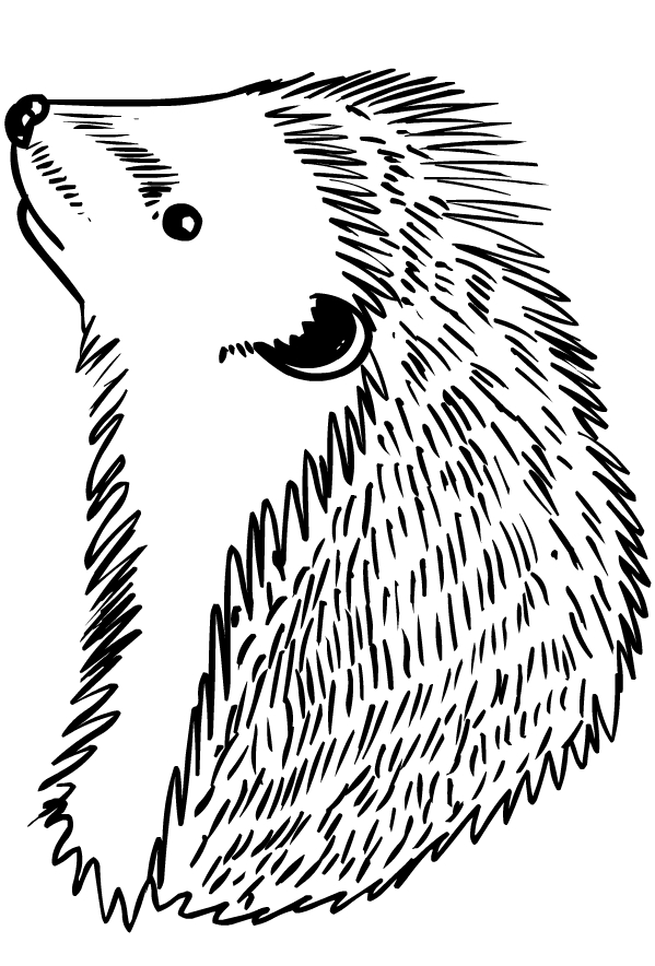 Disegno di ricci da stampare e colorare