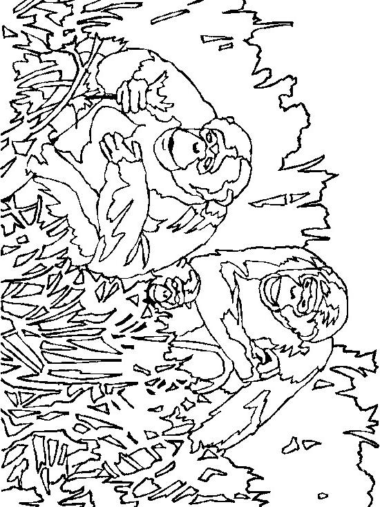 Coloriage 18 des Singes à imprimer et colorier