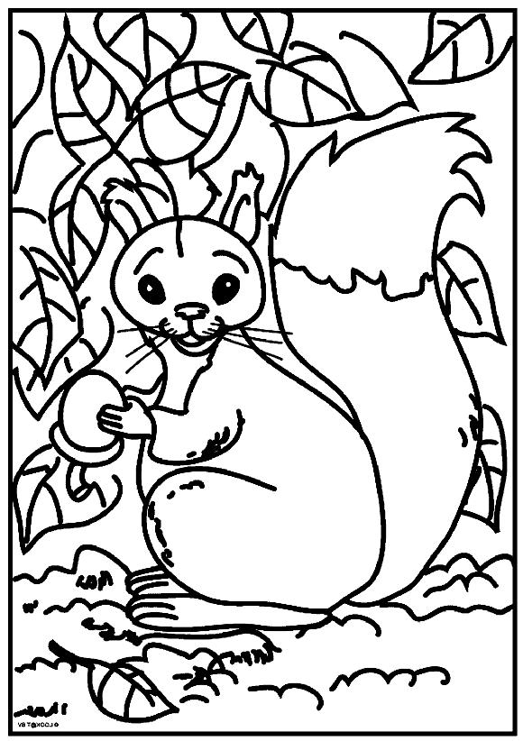Disegno 1 di Scoiattoli da stampare e colorare