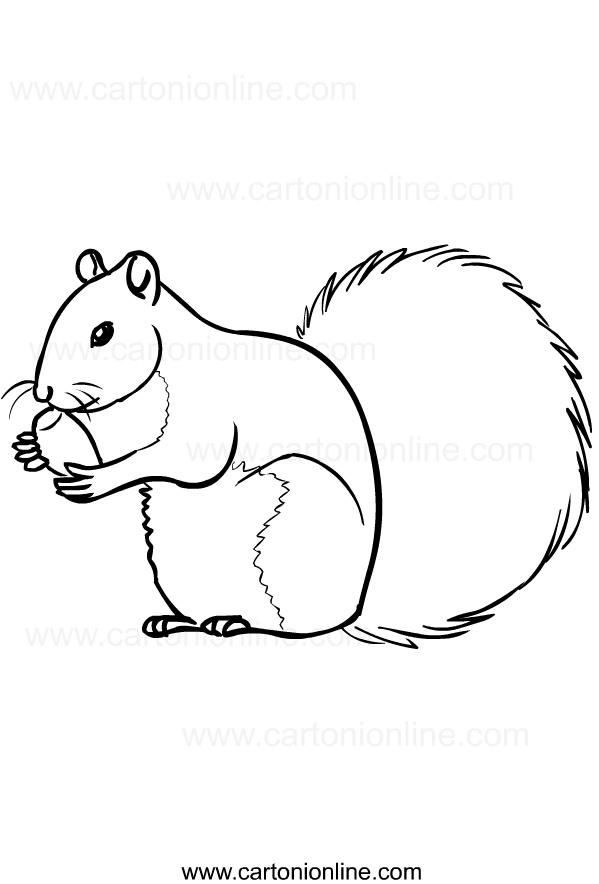 Disegno di scoiattoli da stampare e colorare