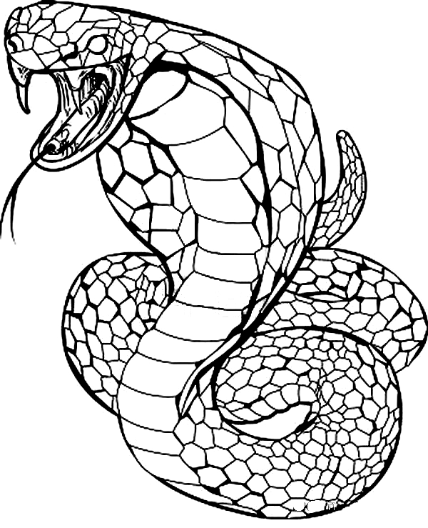 Drawing 3 From Snakes Coloring Page