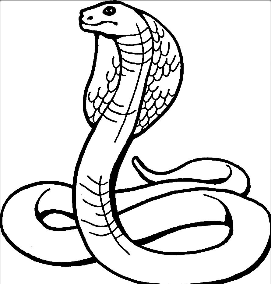 Disegno 17 di serpenti da stampare e colorare