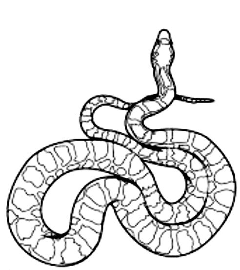 Disegno 20 di serpenti da stampare e colorare