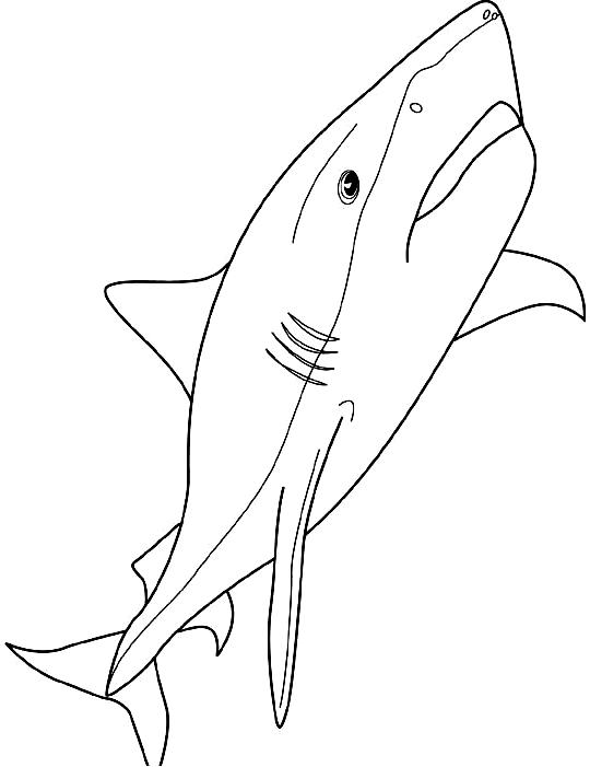 Disegno 7 di squali da stampare e colorare