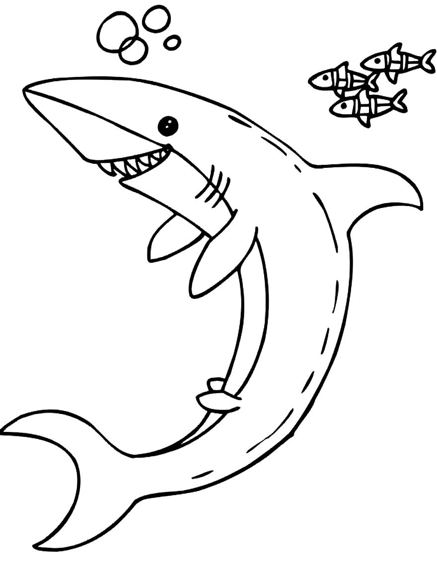 Disegno 12 di squali da stampare e colorare