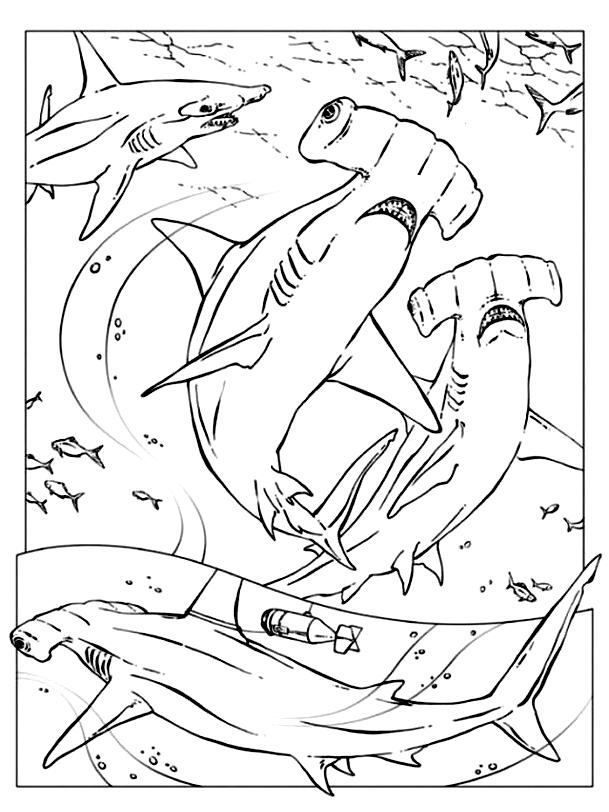 Disegno 13 di squali da stampare e colorare