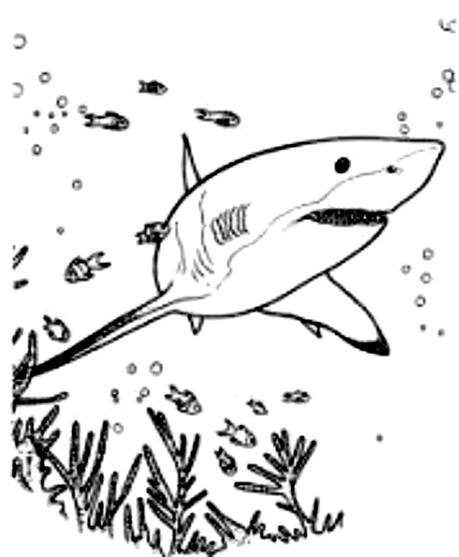 Disegno 21 di squali da stampare e colorare