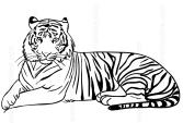 Disegni Di Tigri Da Colorare