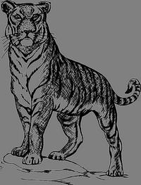 Disegno da colorare di una tigre
