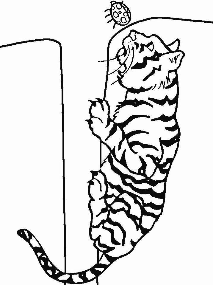 Disegno 9 di tigri da stampare e colorare