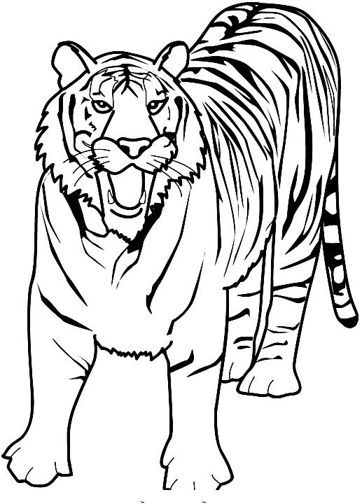 Disegno 11 di tigri da stampare e colorare