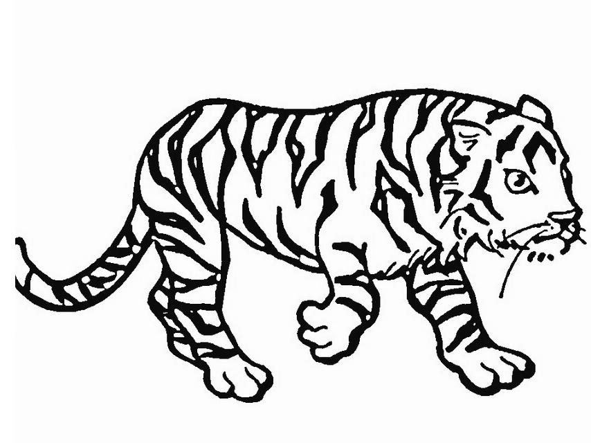 Coloriage 19 des Tigres à imprimer et colorier