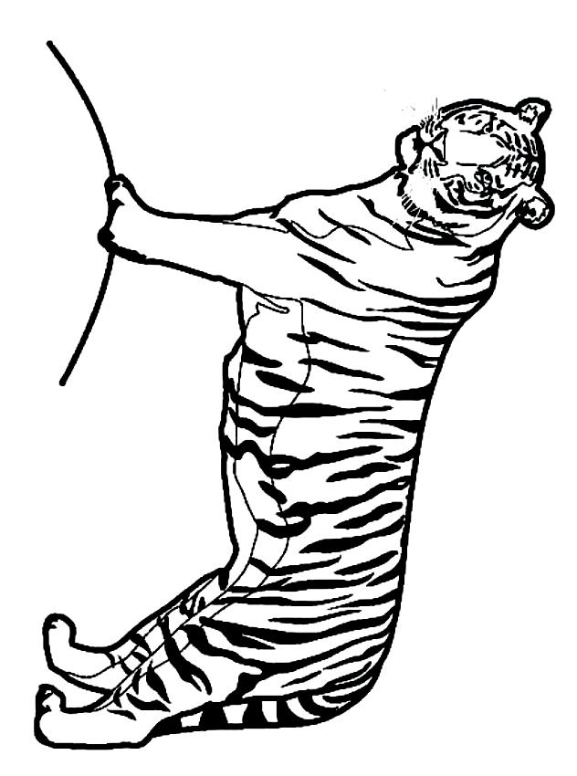 Disegno Di Tigri Da Colorare