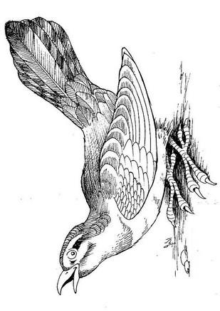 Disegno 12 Di Uccelli Da Colorare