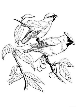Disegno 13 Di Uccelli Da Colorare