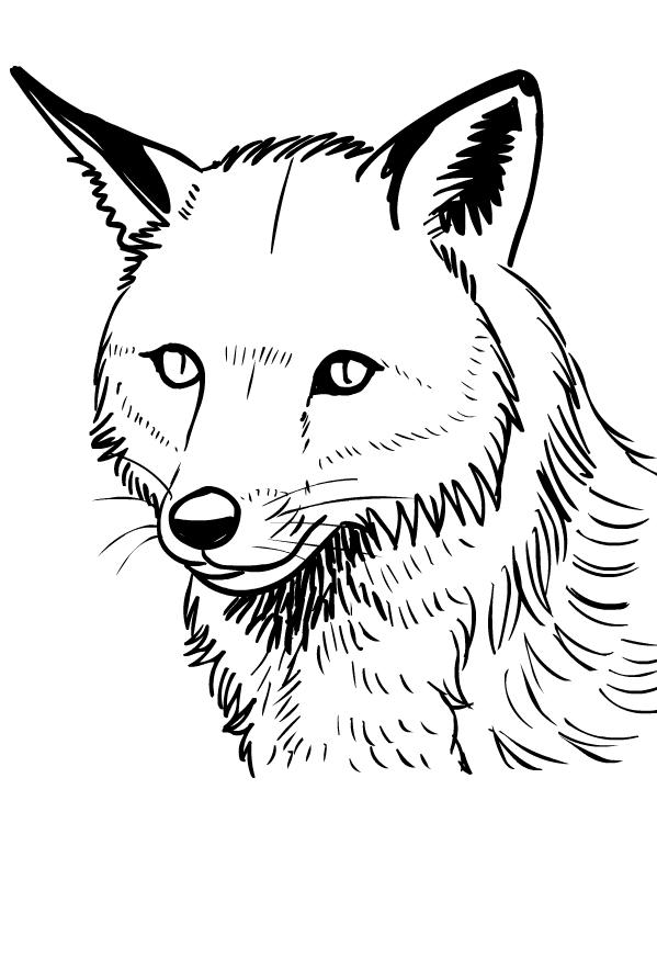Disegno di volpi da stampare e colorare