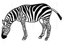 Disegni Di Zebre Da Colorare